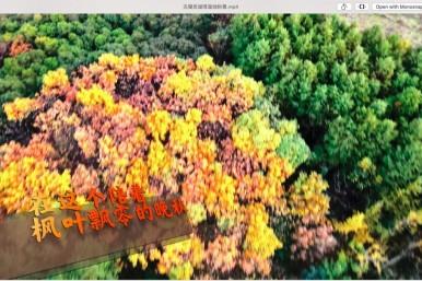 在这个枫叶飘零的晚秋