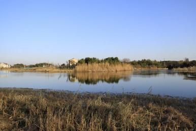 飞鸟和蝉–无锡贡湖湾湿地水上森林冬景