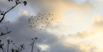 无锡贡湖湾湿地公园2021年秋景